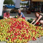 Vortrag von Apfelexperte Erwin Holzer am 9. September zum Apfelsafttag