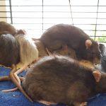 Animal Hoarding – Hier müssen alle mithelfen