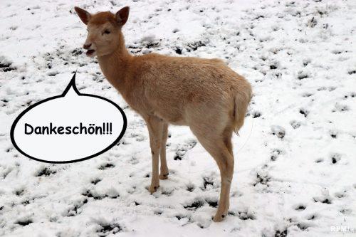 """Ein """"Dankeschön!!!"""" im Voraus aus dem Tierpark Rauenberg"""
