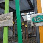 Waldschule Walldorf – Tag der offenen Tür