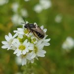 Faszination Biene – Nutzen der Honigbiene für die Umwelt
