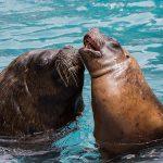 Zoo Heidelberg: Valentinstag im Zoo – Tour d'amour für Erwachsene