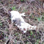 Totes Tier gefunden – Was nun?