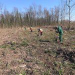 13.500 junge Bäume für Wieslochs Wald der Zukunft