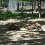 Auch der Walldorfer Tierpark ist wieder geöffnet