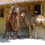 Eine neue Mitbewohnerin für Nala, Elena und Maruk