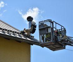 Wiesloch: Feuerwehr rückt zur Rettung eines Storches an