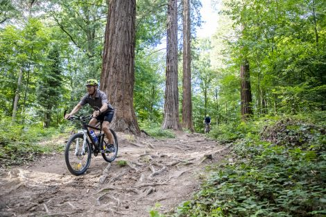 "SCW Mountainbike-Techniktour am Hausberg ""Königstuhl"""