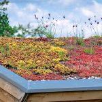 Profitieren von den Umweltförder-programmen der Stadt – hier: Dachbegrünung