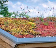 Profitieren von den Umweltförderprogrammen der Stadt – hier: Dachbegrünung