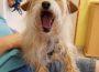 Gute Nachrichten aus dem Tom-Tatze-Tierheim: Hund Timmy hat ein neues Zuhause gefunden