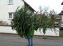 Auch in Walldorf keine Tannenbaum-Aktion