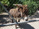 Der Walldorfer Tierpark öffnet wieder!