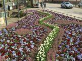 Mit Frühlingsstimmung in die Fußgängerzone – Bepflanzung am Fontenay-aux-Roses Platz ein echter Hingucker!
