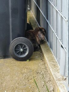 Text und Fotos: Tierschutz Wiesloch