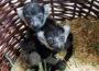Zoo Heidelberg: Nachwuchs bei den Gürtelvaris – zwei Geschwister entdecken ihre Welt