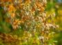 Auch Buchen können verdursten: Wälder im Rhein-Neckar-Kreis im Klimastress