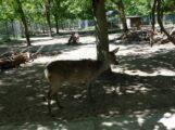 Tierpark Walldorf ab sofort wieder geöffnet