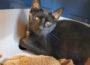 Die Mitarbeiter im Tom-Tatze-Tierheim sehen schwarz: Auch ein Tierheim kann an seine Grenzen kommen