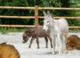 Fertiggestellt und eröffnet: Bauernhof im Zoo Heidelberg!