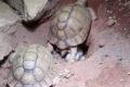 Nach Beschlagnahmung: Wertvoller Beitrag zu Artenschutz