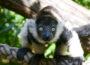 """Zoo Heidelberg: """"Ein Tag bei den Tieren"""" für neugierige Zoo-Freunde!"""