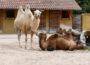 Dritte mobile Impfaktion im Zoo am 15. August im Zoo Heidelberg!