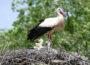 Zoo Heidelberg: Erfolgreiches Storchen-Jahr